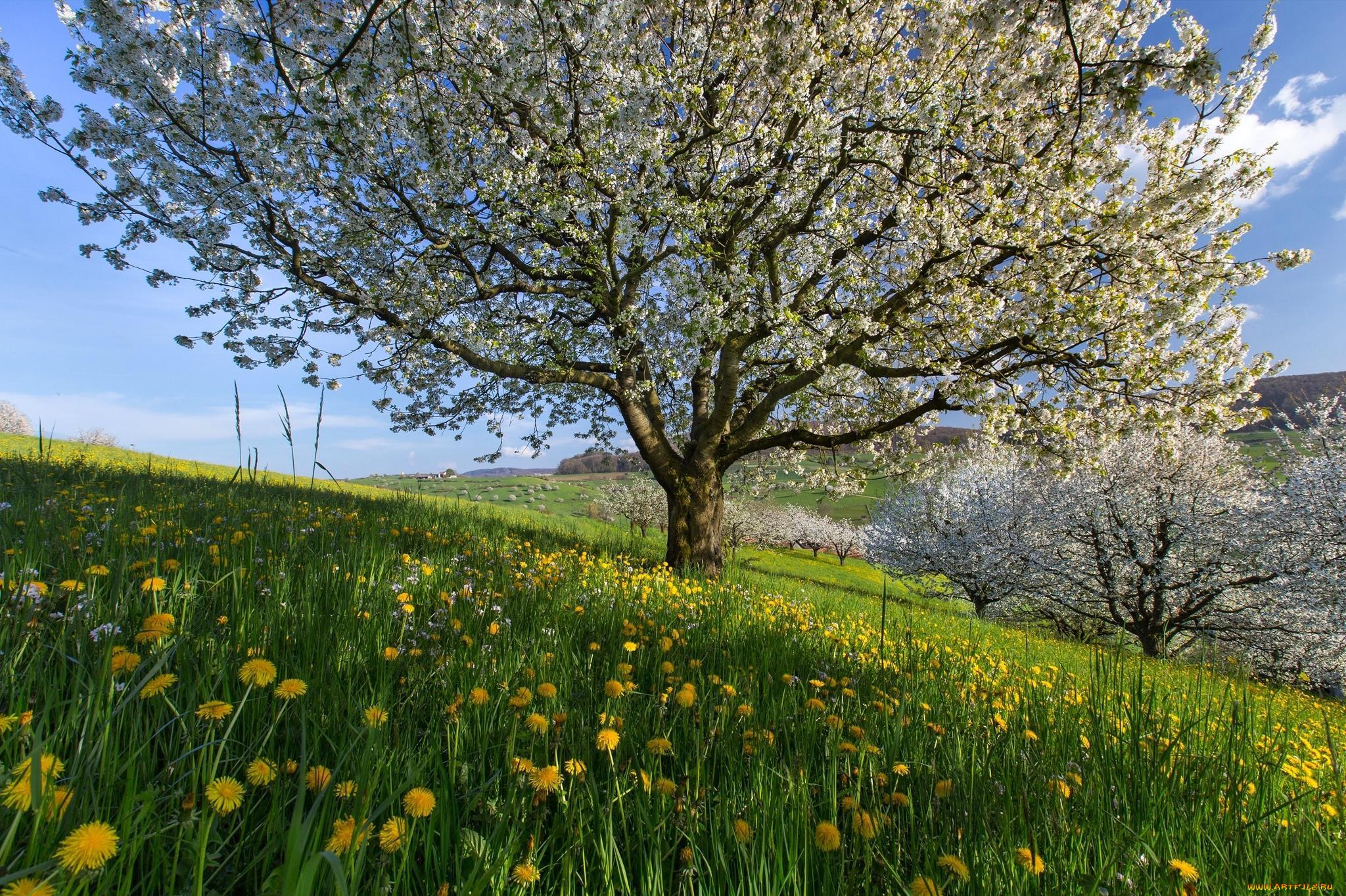 была закрытой, фото цветущая весна весенние пейзажи белого цвета